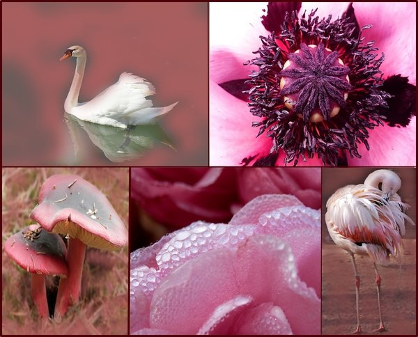 blüten, schwan, collage, flamingo, rosa-pink