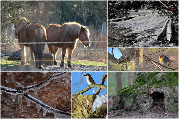 burgdorfer-land, nur-mal-so-2017, naturbeobachtung-2017, vogelfotografie-2017, naturbeobachtung-in-burgdorf, vogelbeobachtung-in-burgdorf, 2017, vogelbeobachtung-2017, burgdorfer-stadtpark, winterspaziergang, januar-2017, collage-2017