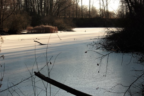 baggersee, frostige-natur