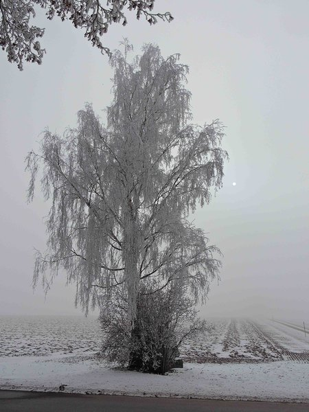 natur, winter
