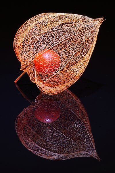 Physalis-Shooting 2017