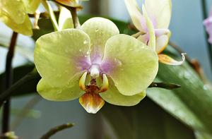 Tolle Orchidee 3
