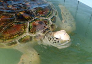 Sea Turtle Conversation Center Phang -Nga !