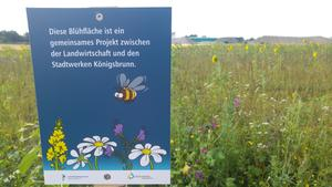 Supersache - let's bee...