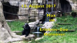 13. August 2017. Max im Erlebnis-Zoo Hannover.