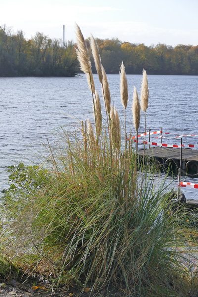 Herbst am Toeppersee
