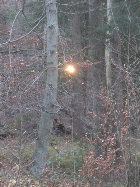 sonne, wald, naturspaziergang