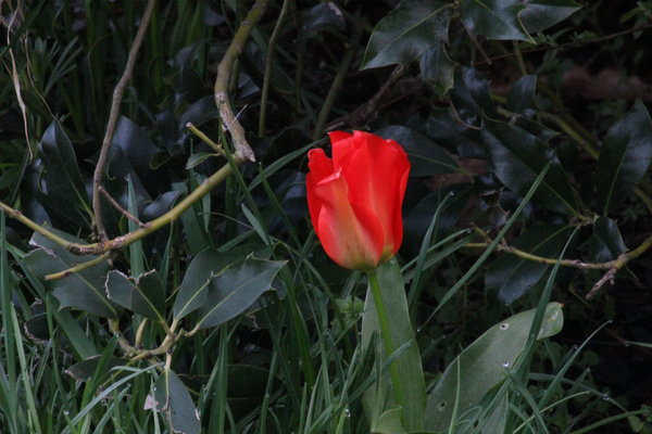 blüte, rot