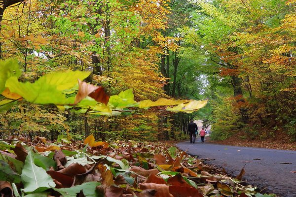 herbst, wald, herbstspaziergang