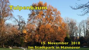 15. November 2018. Im Stadtpark in Hannover am Congress Centrum.