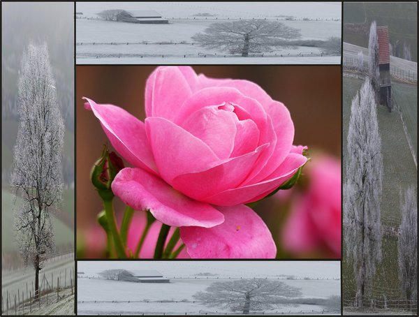 natur, winter, sommer, collage