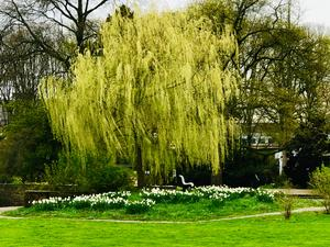 April 2019. Im Stadtpark in Hannover am Congress Centrum.