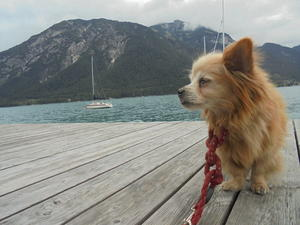 Felix am Achensee!