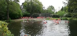 Flamingopanorama