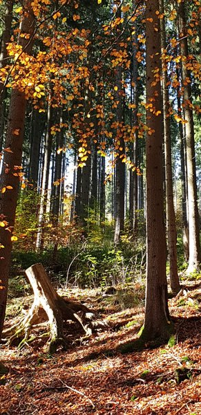 natur-pur, herbstspaziergang
