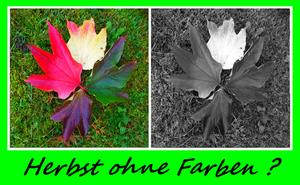 Herbst ohne Farbe ?