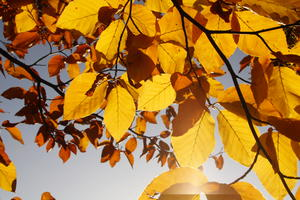 Pures Herbstgold