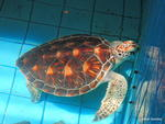 Sea Turtleconservation Center