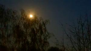 7. April 2020. Im Park. Vollmond!