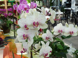 Orchideenzentrum Celle